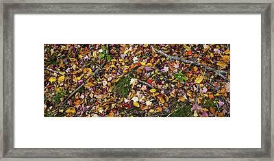Fallen Autumn Leaves, Mount Desert Framed Print