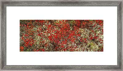 Fallen Autumn Leaves On Rocks, Schoodic Framed Print