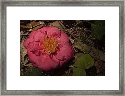 Fallen Beauty Framed Print by Frank Feliciano