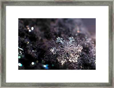 Fallen Beauty Framed Print