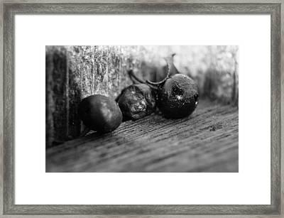 Fallen Berries Framed Print