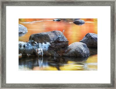 Fallen Birch Framed Print by Michael Hubley