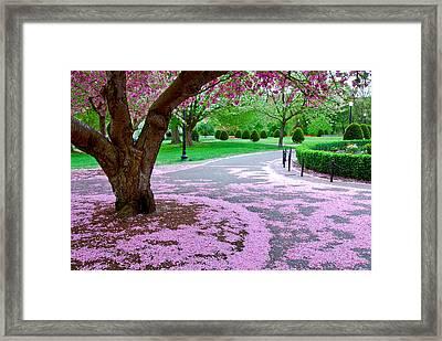 Fallen Blossoms Framed Print