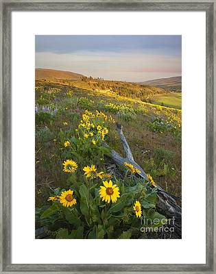 Fallen In Paradise Framed Print by Mike  Dawson