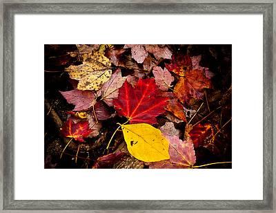 Fallen Framed Print by Karol Livote