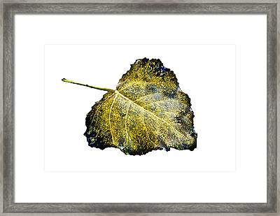 Fallen Leaf 1t Framed Print by Greg Jackson