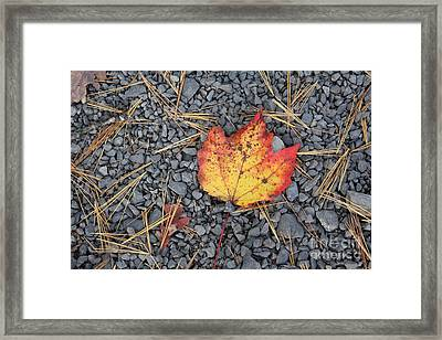 Framed Print featuring the photograph Fallen Leaf by Dora Sofia Caputo Photographic Art and Design
