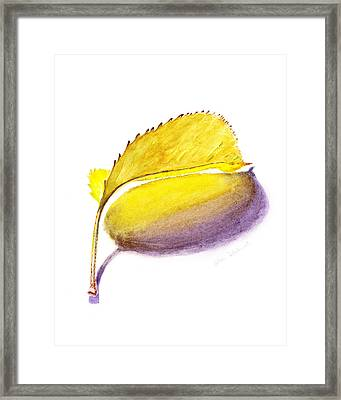 Fallen Leaf Yellow Shadows Framed Print by Irina Sztukowski