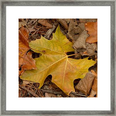 Fallen Leaves Framed Print by Art Block Collections