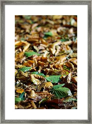 Fallen Leaves Framed Print