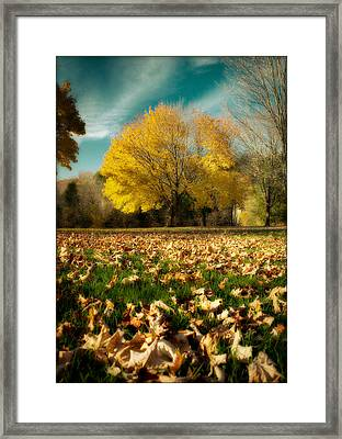 Fallen Leaves Framed Print by Cindy Haggerty