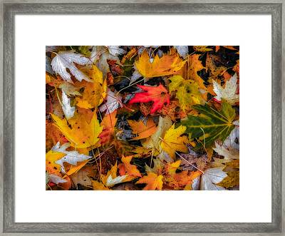Fallen Leaves Framed Print by Dennis Bucklin