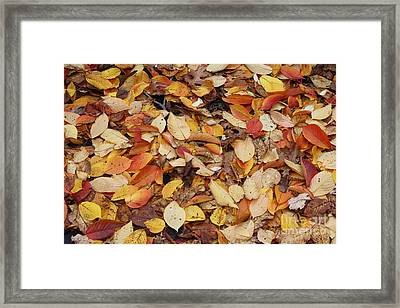 Framed Print featuring the photograph Fallen Leaves by Dora Sofia Caputo Photographic Art and Design