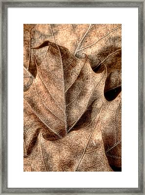 Fallen Leaves I Framed Print by Tom Mc Nemar