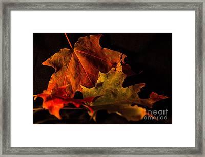 Fallen Leaves Framed Print by Judy Wolinsky
