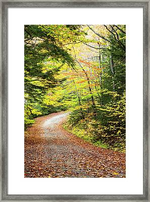 Fallen Leaves Litter A Forest Road Framed Print by Robbie George