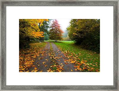 Fallen Leaves On A Road, Washington Framed Print by Panoramic Images