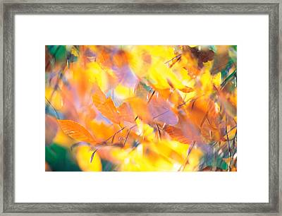 Fallen Leaves On Ground With Backlit Framed Print by Panoramic Images
