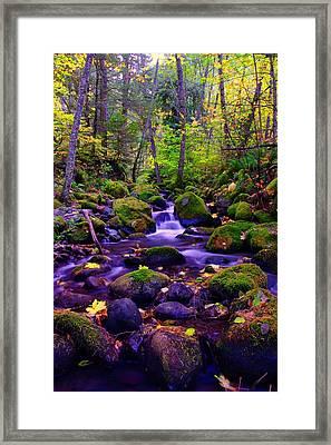 Fallen Leaves On The Rocks Framed Print