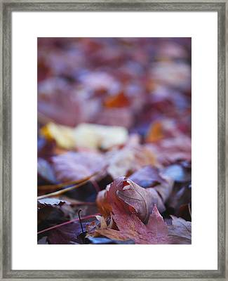 Fallen Leaves Road Framed Print by Irina Wardas