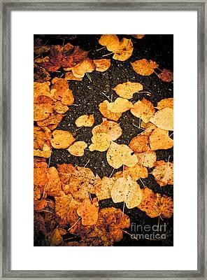 Fallen Leaves Framed Print by Silvia Ganora