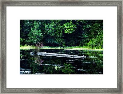 Fallen Log In A Lake Framed Print by Bill Cannon