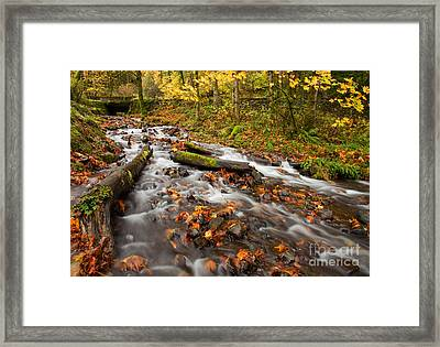 Fallen  Framed Print by Mike  Dawson