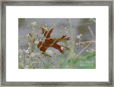 Framed Print featuring the photograph Fallen Oak Leaf Caught In Weeds by Debby Pueschel