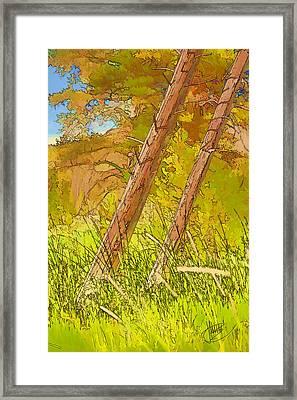 Fallen Pines Framed Print