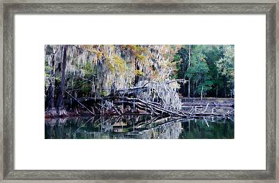 Fallen Reflection Framed Print by Lana Trussell