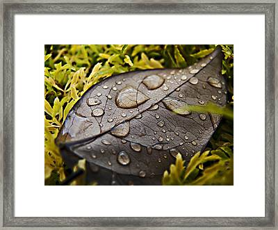 Fallen Framed Print by Sarita Rampersad