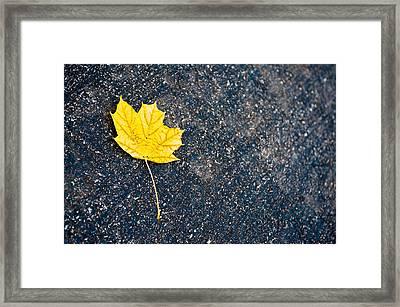 Fallen Framed Print by Sebastian Musial