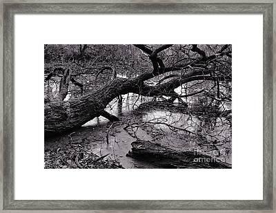 Fallen Tree Framed Print by Dariusz Gudowicz