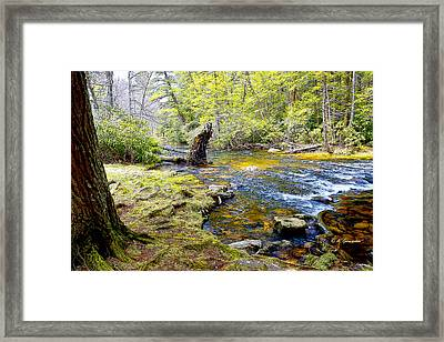 Fallen Tree In Stream Pocono Mountains Framed Print by A Gurmankin