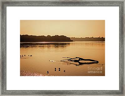 Fallen Tree In The River Framed Print by Tom Gari Gallery-Three-Photography