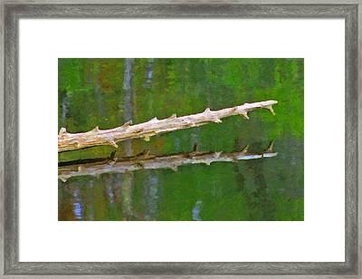 Fallen Tree Framed Print by Pat Now