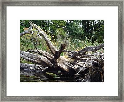 Fallen Tree Framed Print