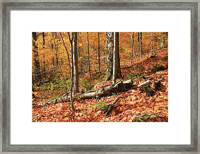 Framed Print featuring the photograph Fallen Trees by Alicia Knust