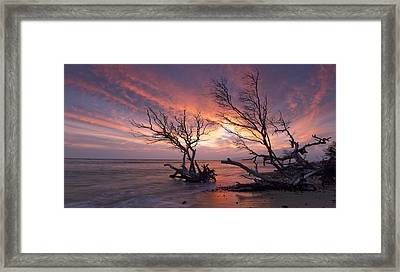 Fallen Trees Framed Print by James Roemmling
