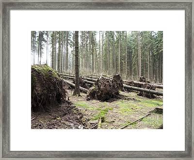 Fallen Trees Framed Print