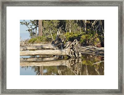Fallen Trees Reflected In A Beach Tidal Pool Framed Print by Bruce Gourley