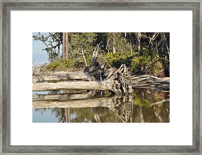 Fallen Trees Reflected In A Beach Tidal Pool Framed Print