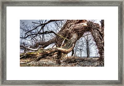 Fallen Twisted Giant Framed Print