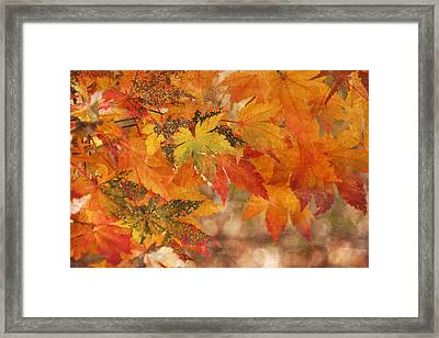 Falling Colors I Framed Print