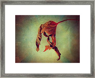 Falling Falling Framed Print by Shirley Sirois