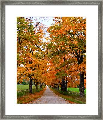 Falling For Country Farm Framed Print by Lingfai Leung