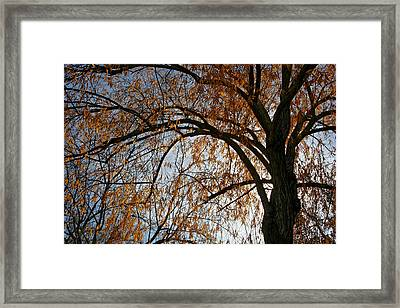 Falling Gold Framed Print by Laurie Search