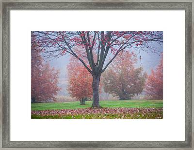 Falling Framed Print by Karol Livote