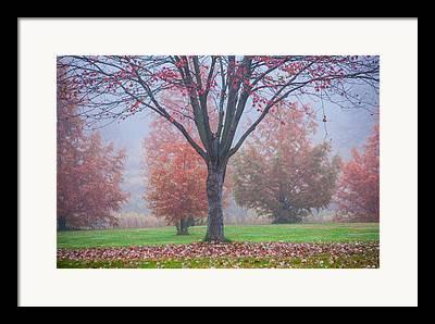 Moments Of Stillness Framed Prints