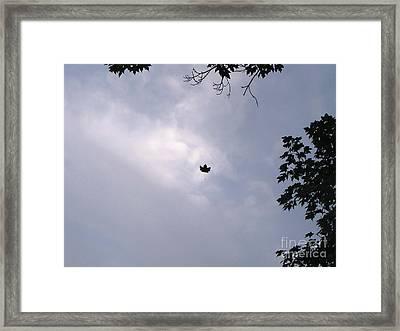 Falling Leaf Aka Lucky Shot Framed Print by Melissa Stoudt
